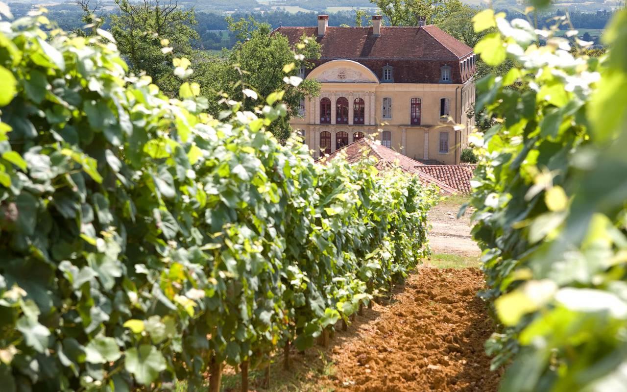 Activités visite des vignobles aux alentours, vacances hautes pyrénées, Hôtel La Solitude.